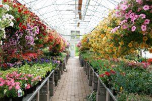 标志性的成功花园中心——年销售额增长至580万纽币! photo