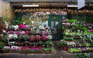 奧克蘭市區花店出售 photo